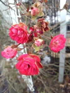 「北陸新幹線が春を連れて、やってくる。」<280>